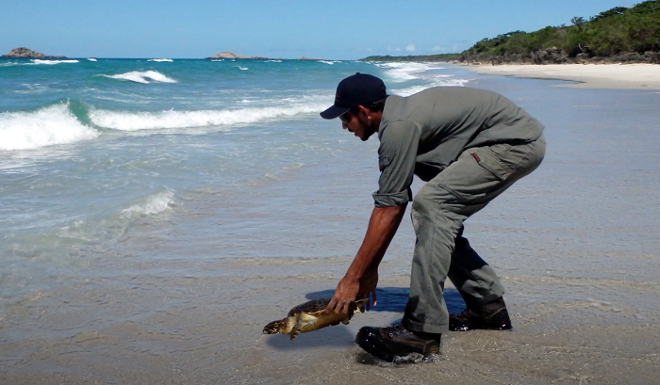 Gidarjil turtle conservation 700 px